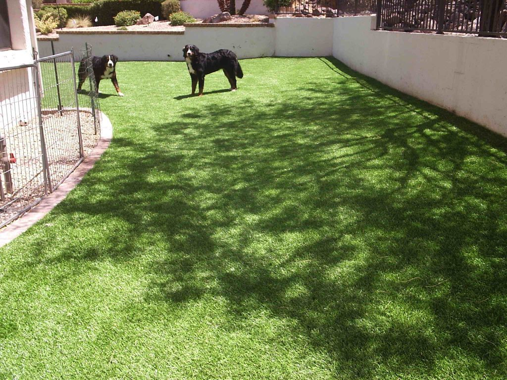 Synthetic Lawn Pet Turf Company Lakeside, Best Artificial Pet Turf Pricing