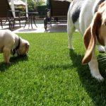 Synthetic Pet Turf Company Lakeside, Artificial Pet Grass Backyard Installation