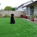 Synthetic Lawn Pet Turf Lakeside, Top Rated Artificial Grass Installation for Dogs