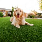 Synthetic Grass For Dogs Lakeside, Artificial Lawn Dog Run Installation